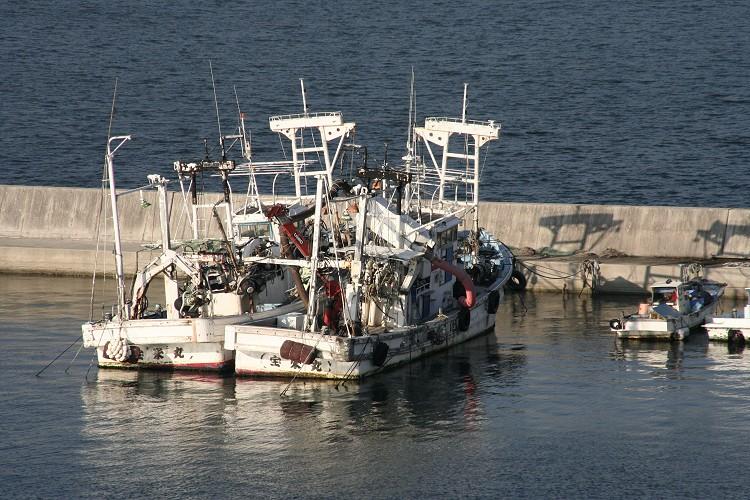 係留されている漁船