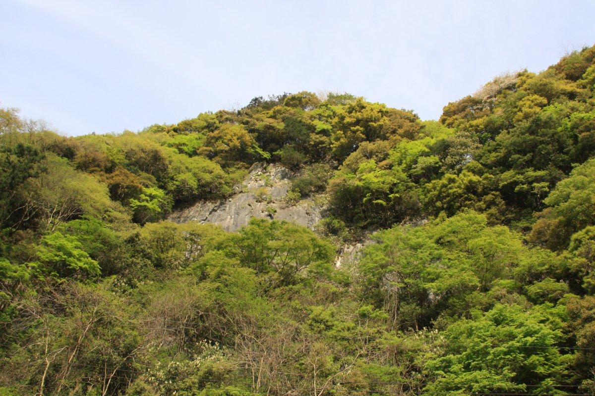 新緑の岩場